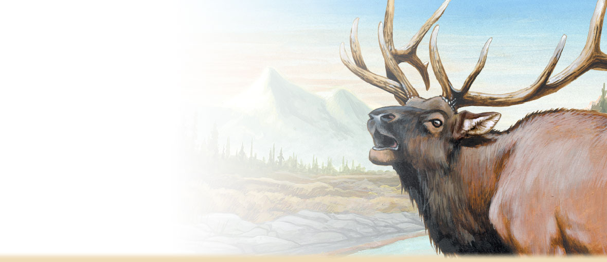 American Elk Facts, Information, Photos, and Tracking Tips from American Expedition.