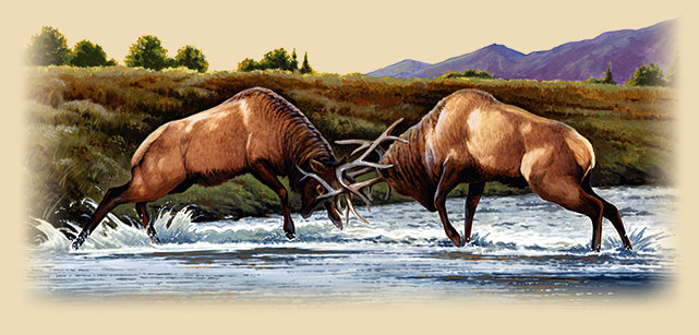 Artwork of two bull elk butting horns