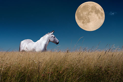 An American mustang in a field in front of a dramatic moon.