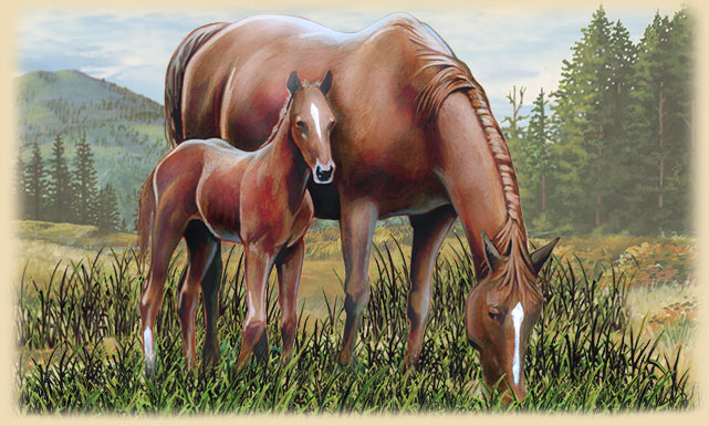 Painting of an American Mustang with its foal.