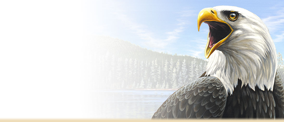 Bald Eagle Facts, Trivia, Information, Photos, and the place of the Bald Eagle in American History.
