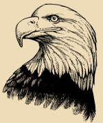 A sketch of a bald eagle's head