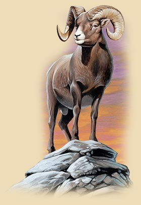 Art of a bighorn sheep standing on a rock in front of a sunset.