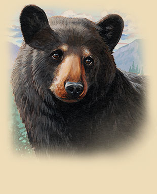 Painitng of a Black Bear Head Close Up