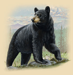 Painting of a Black Bear Standing On A Rock.