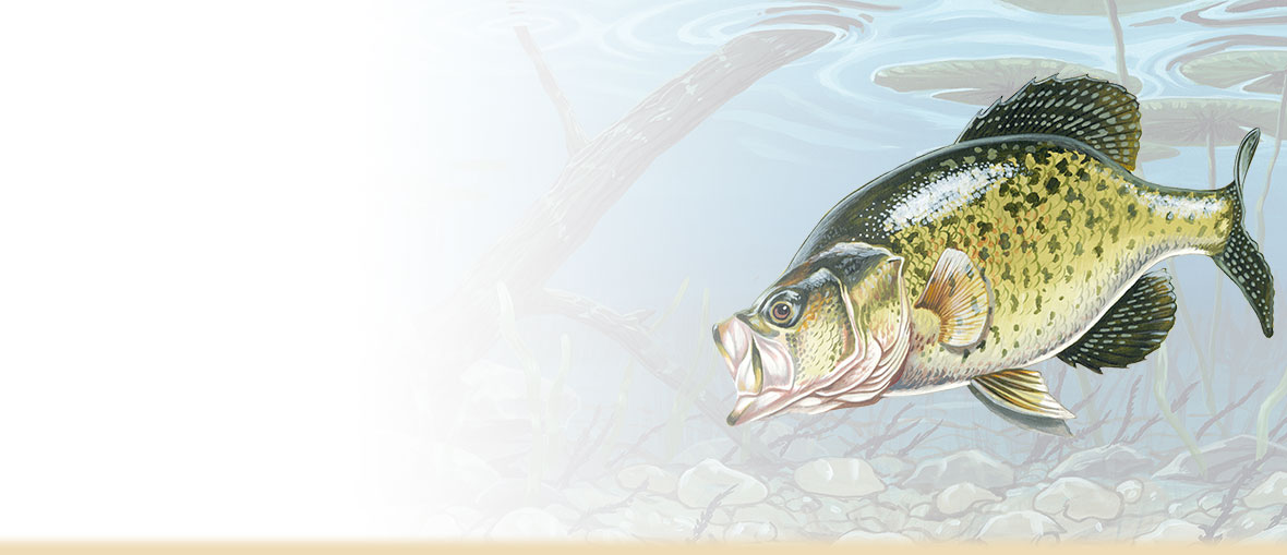 Crappie Facts, Photos, and Information