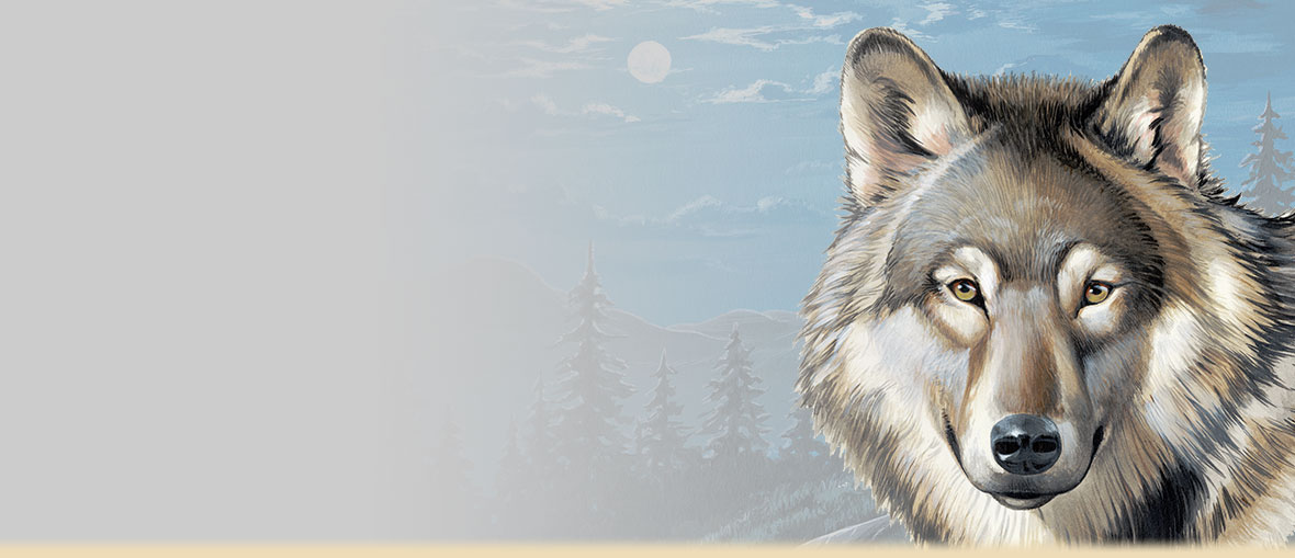 Gray Wolf Facts, Trivia, Information, Habitat, and Artwork.