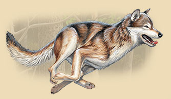 Artwork of a running gray wolf.