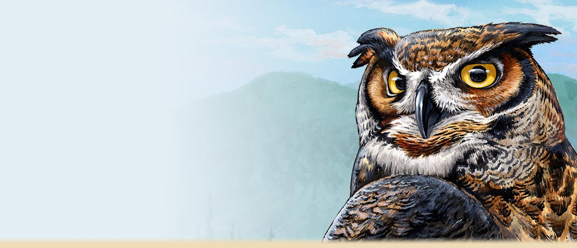 Great Horned Owl Facts, Photos, Information, and Owl Watching Tips.