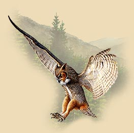 Art of a great horned owl flying.