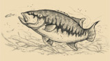 A sketch of a Largemouth Bass.