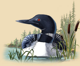 Painting of a loon on the water.