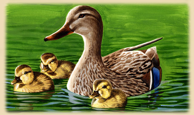 Painting of a Mallard Duck mother with her ducklings.