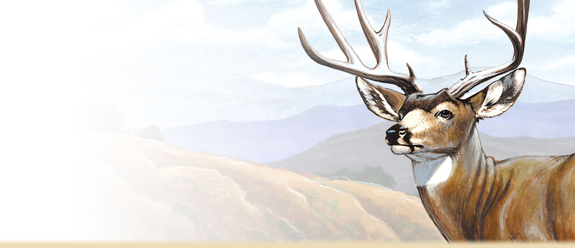 A painting of a mule deer in front of rolling hills.