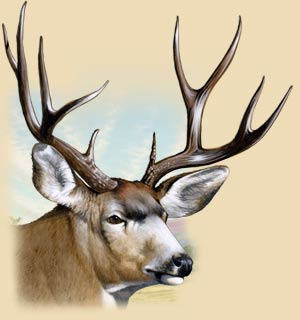 A painting of a mule deer's head.