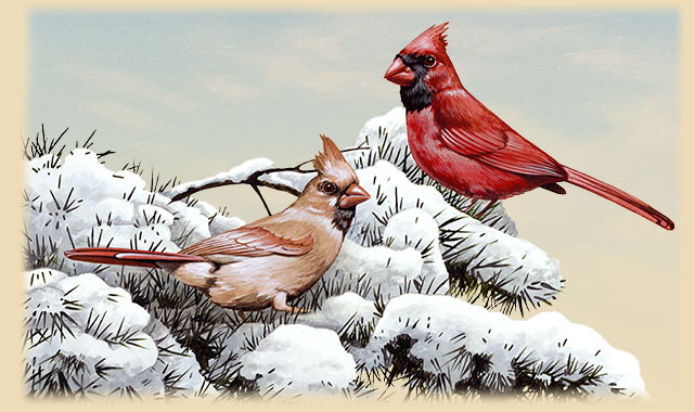 Artwork of two Northern Cardinals in a snow covered evergreen tree.