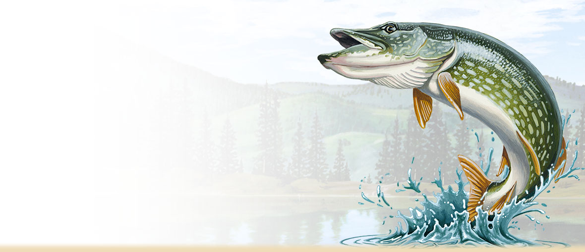 Painting of a jumping northern pike.