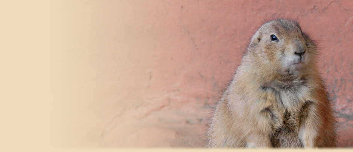 Prarie Dog Painting