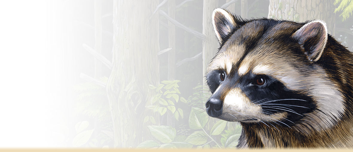 Painting of a Raccoon