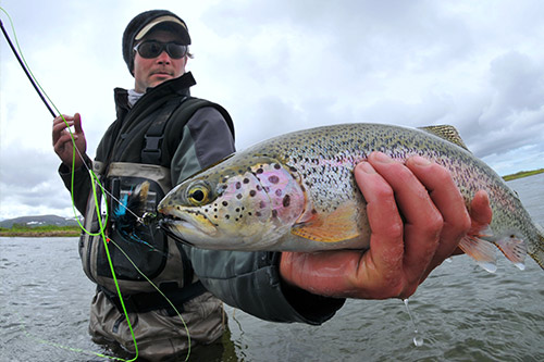 Rainbow trout being held by a fisherman.