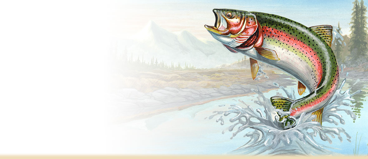 Rainbow Trout Facts, Information, Photos, Habitat Details, Fishing Tips, and Artwork