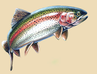 Painting of a swimming rainbow trout.