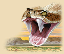 Painting of a western diamondback rattlesnake's fangs