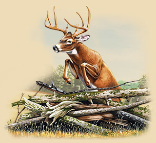 A painting of a whitetail deer leaping over some sticks.