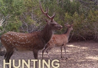 Hunting Photos