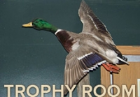 Trophy Room (Taxidermy Photos)