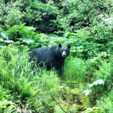Black Bear by Fishing Hole