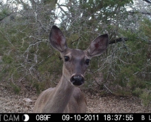 Doe In Game Camera