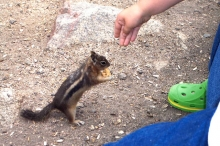 Friendly Chipmunk