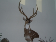 Nueces River Ranch Buck Trophy